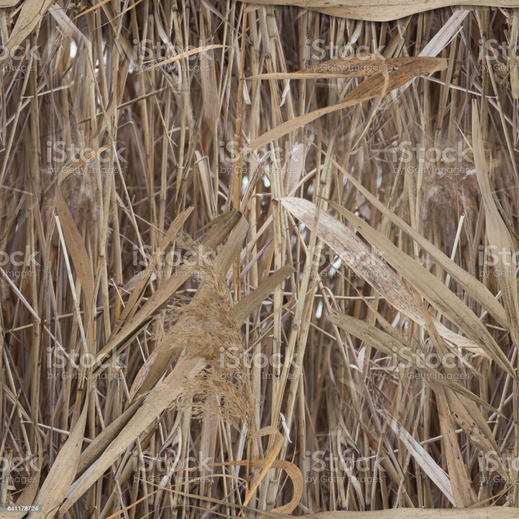 Water reed pattern camouflage for duck hunter stock photo