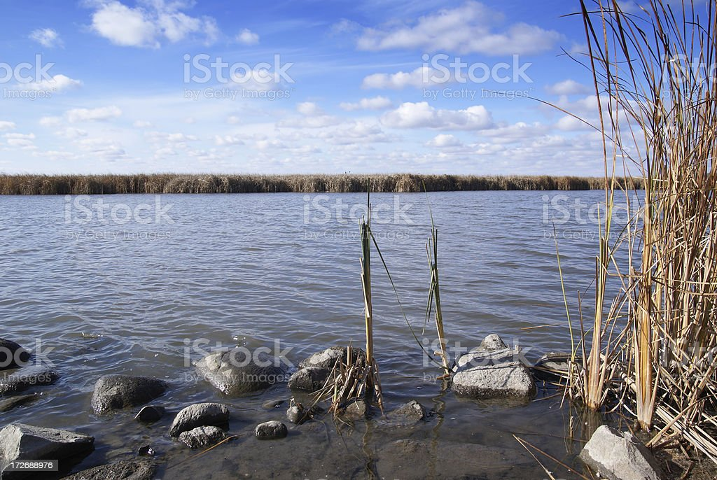 water, reeds, and clouds royalty-free stock photo
