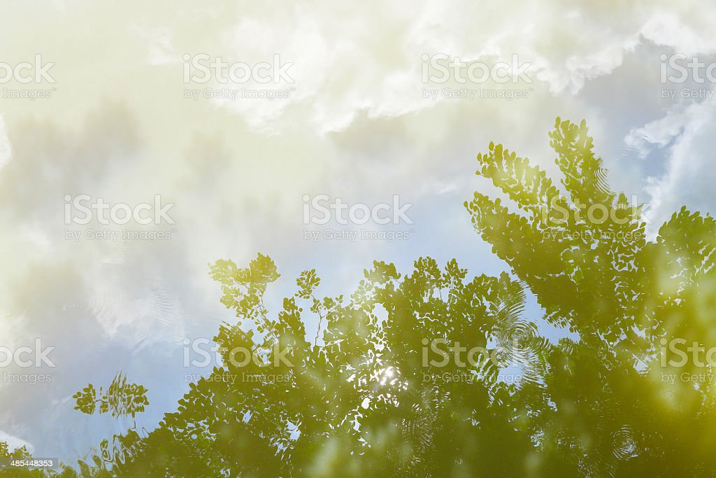 Water reflection of blue sky and leaves. royalty-free stock photo