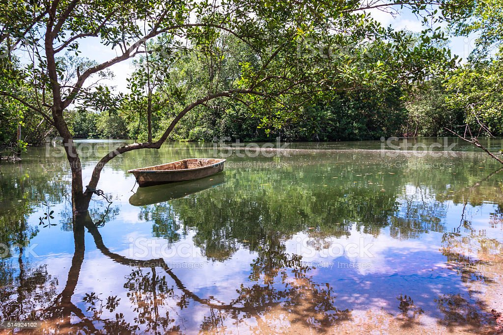 Water Reflections on a Peaceful Pond in Paradise stock photo