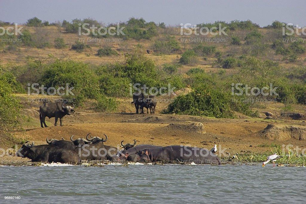 Water safari stock photo