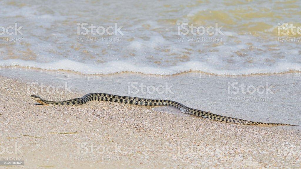 Water snake at the seashore stock photo