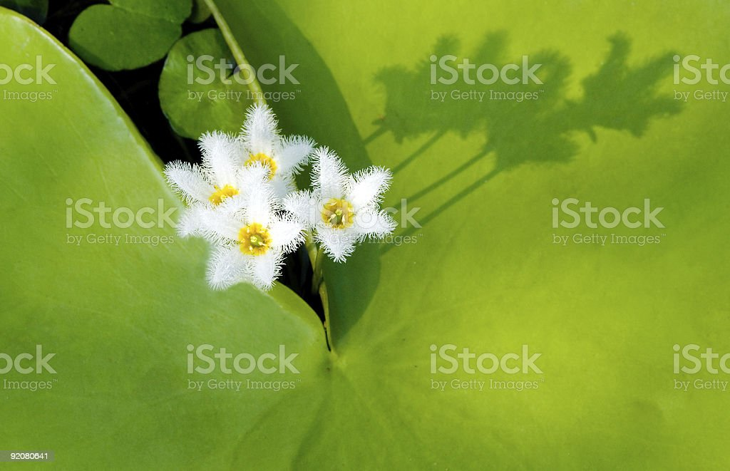 Water Snowflake with shadow royalty-free stock photo