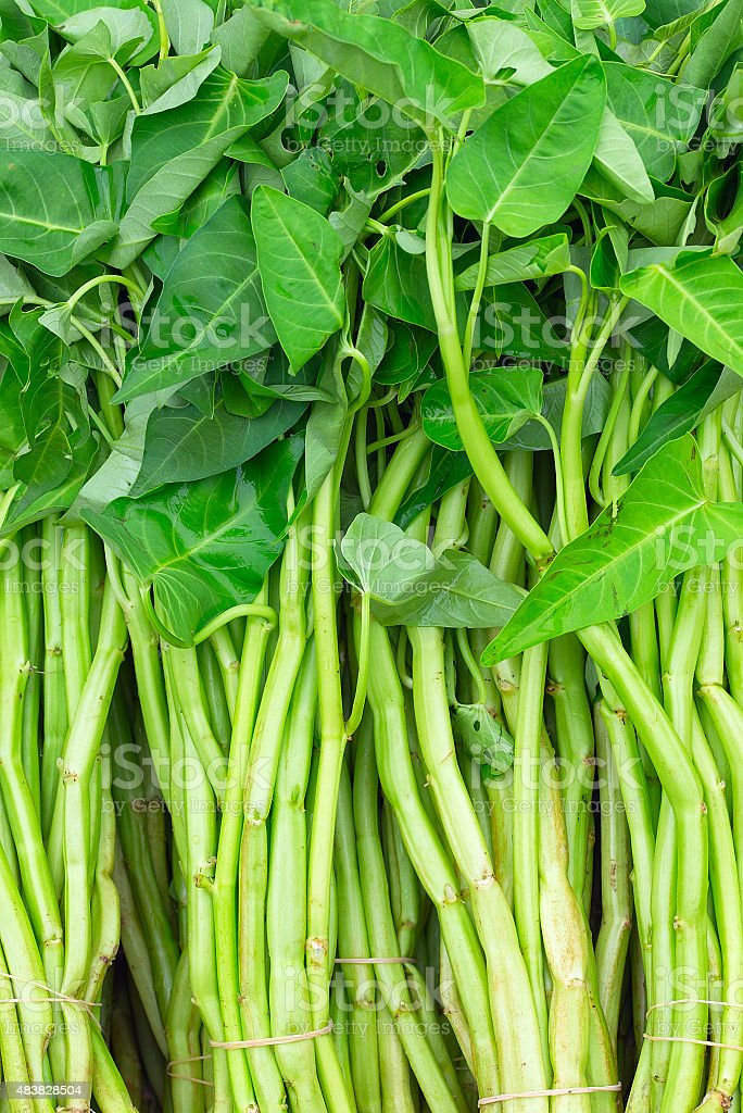 Water spinach stock photo