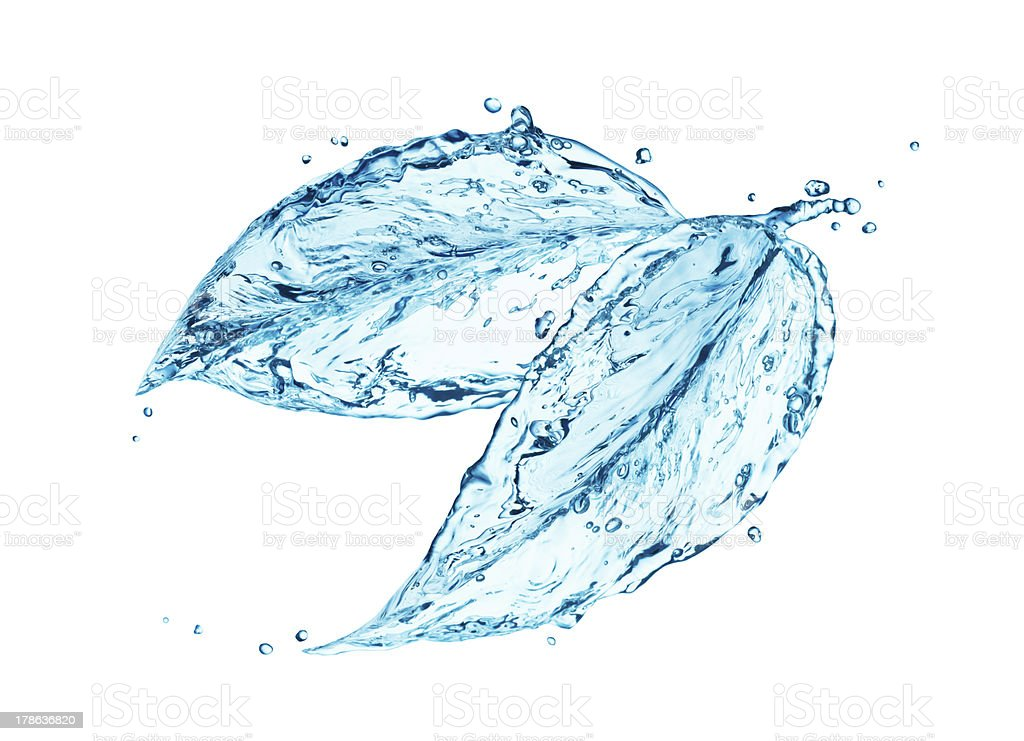 Water splash in form of plant stock photo