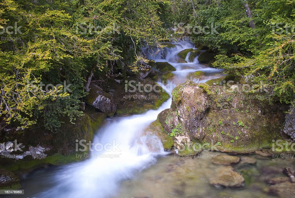 Water Spring in the Forest royalty-free stock photo