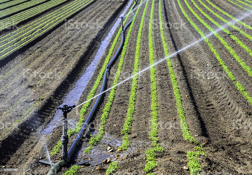 Water sprinkler system working on a nursery plantation royalty-free stock photo