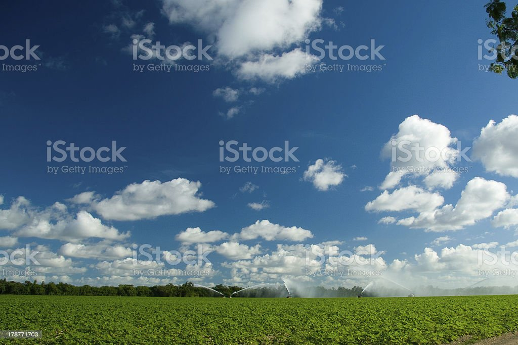 Water sprinkling on plantation royalty-free stock photo
