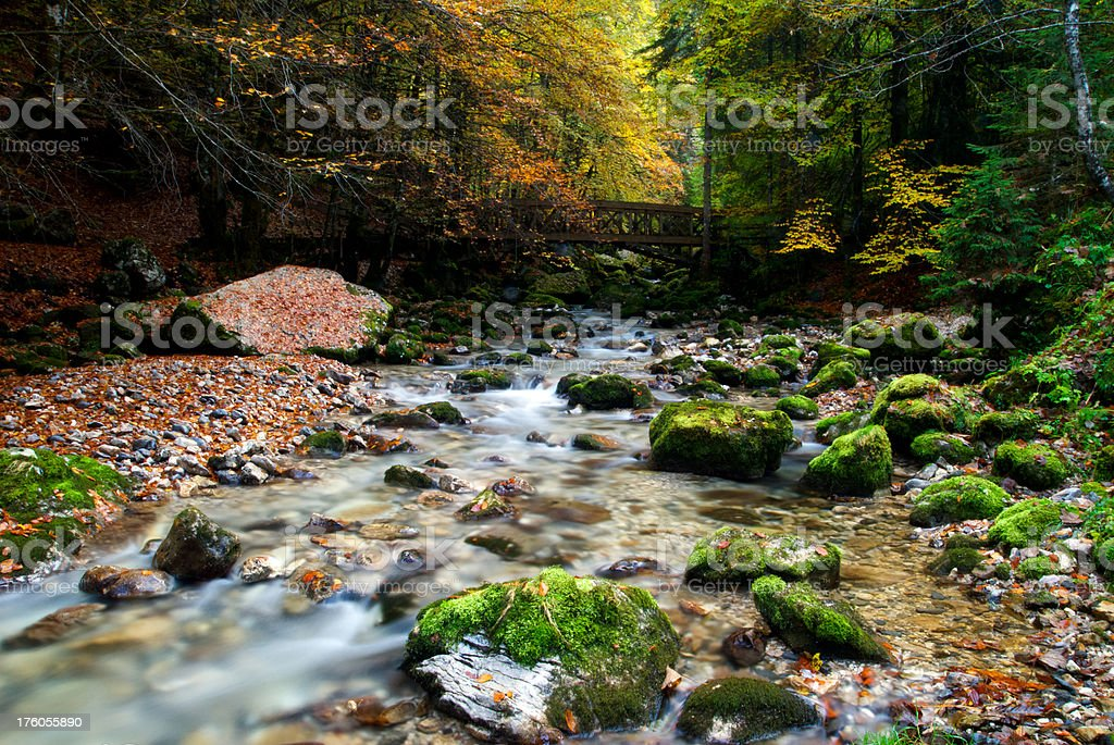 Water stream in fall royalty-free stock photo