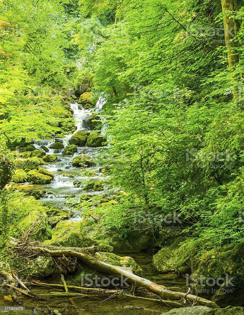 Water Stream in the Forest stock photo