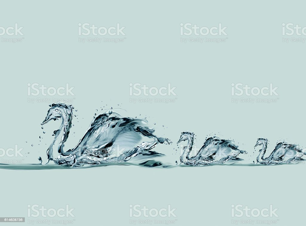 Water Swans Swimming royalty-free stock photo