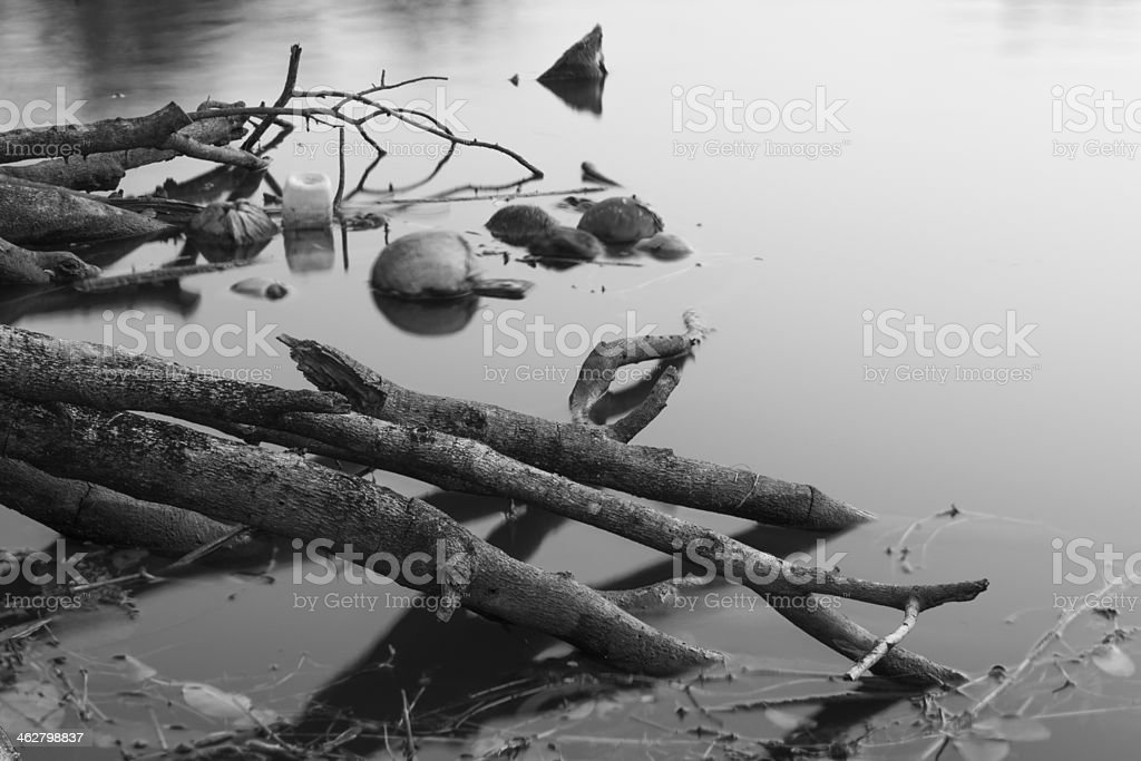 Water timber. stock photo
