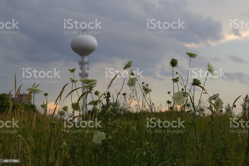 Water tower in the distance behind flowers and tall grass stock photo