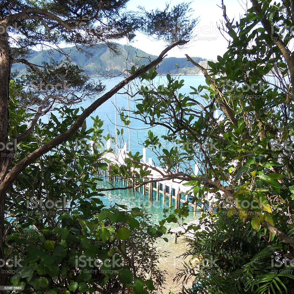 Water View Through Trees stock photo