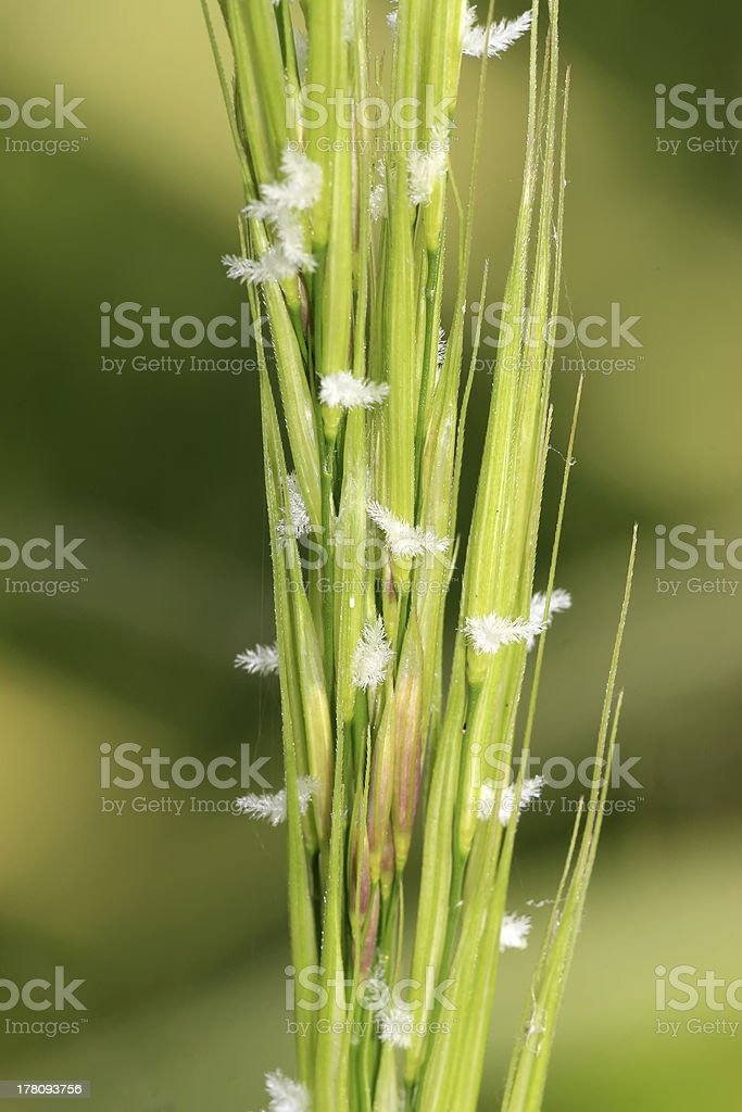 water weeds royalty-free stock photo