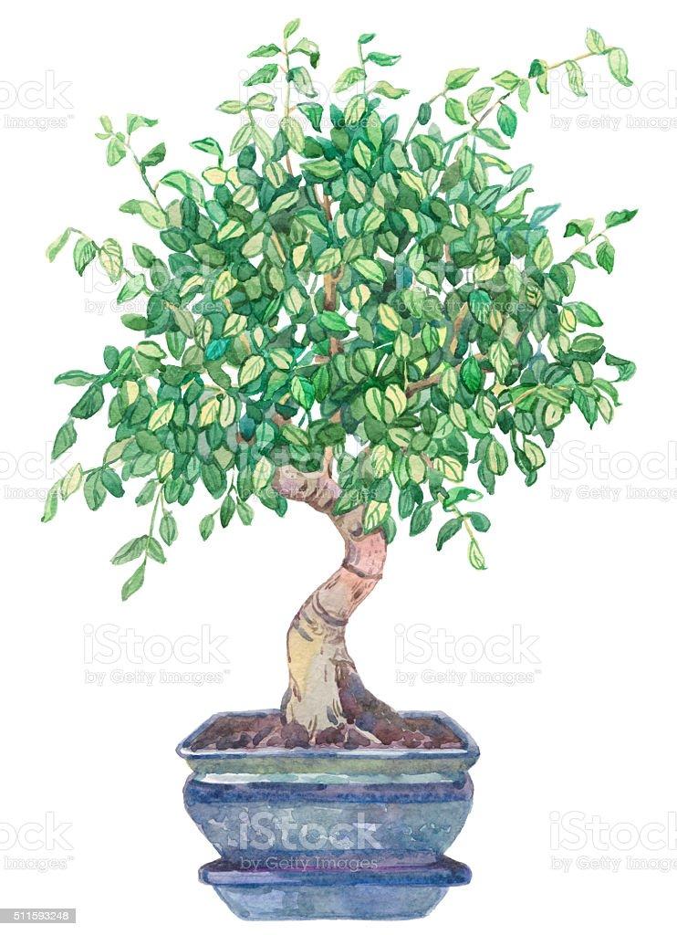 Watercolor bonsai tree. stock photo