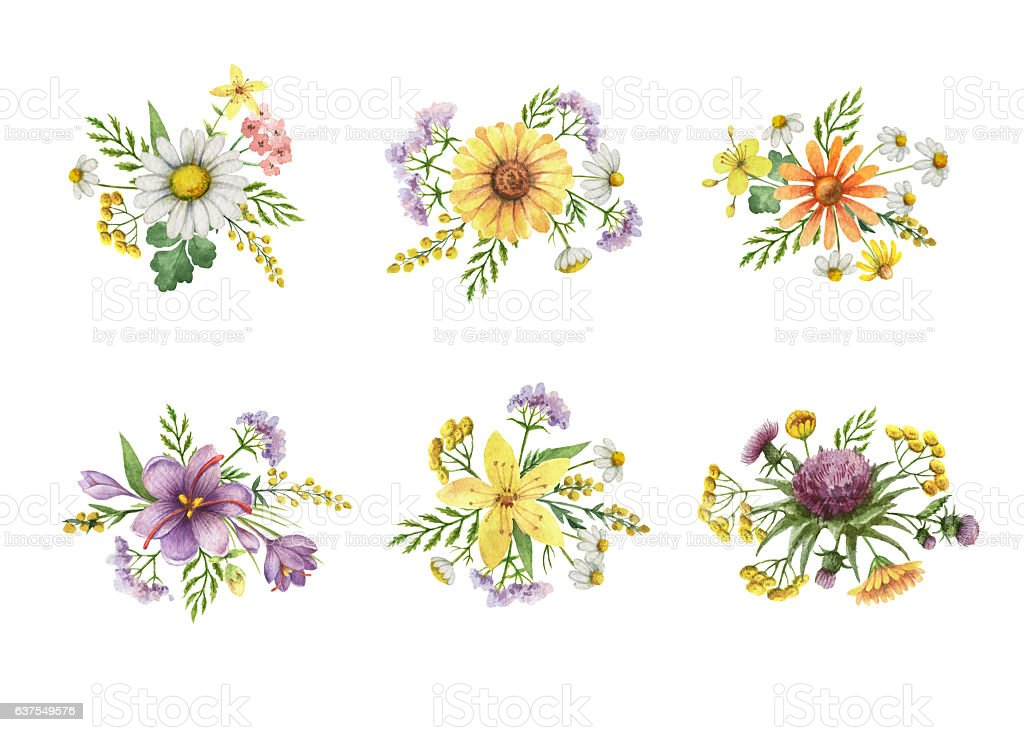 Watercolor bouquet with meadow plants. stock photo