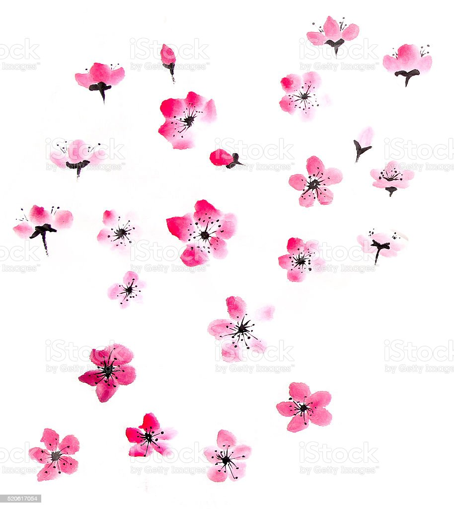 watercolor cherry blossom stock photo