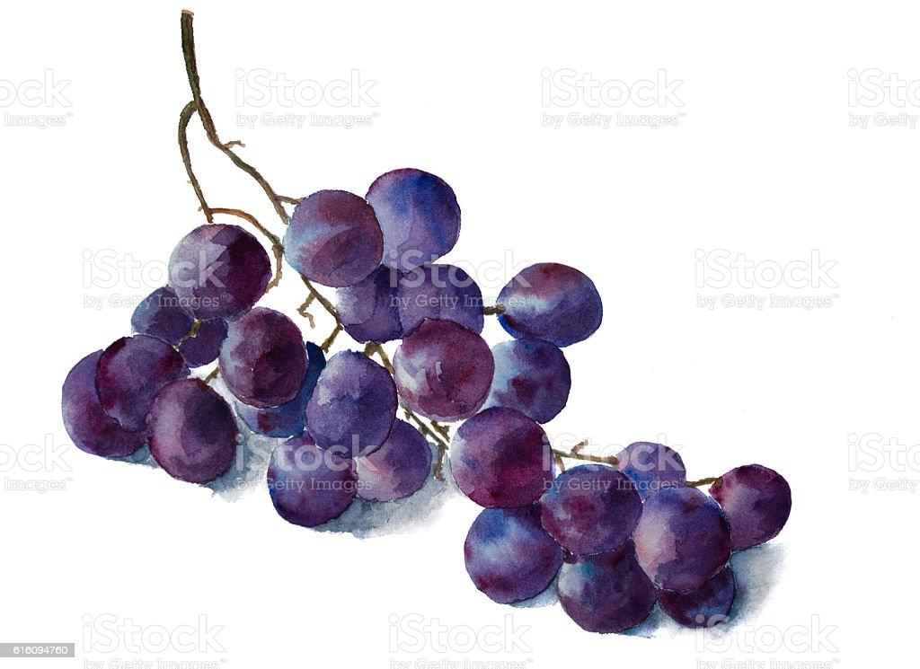 Watercolor grape brunch stock photo