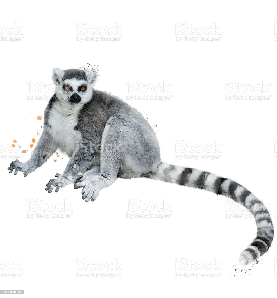 Watercolor Image Of Ring-tailed Lemur vector art illustration
