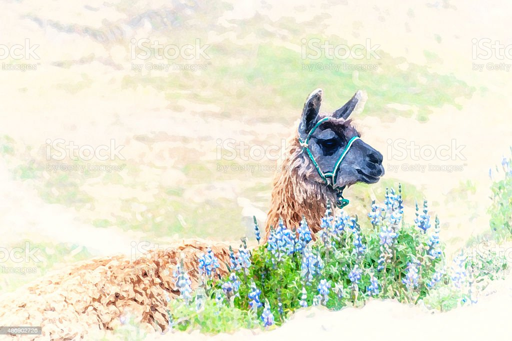 Watercolor Llama, South America stock photo