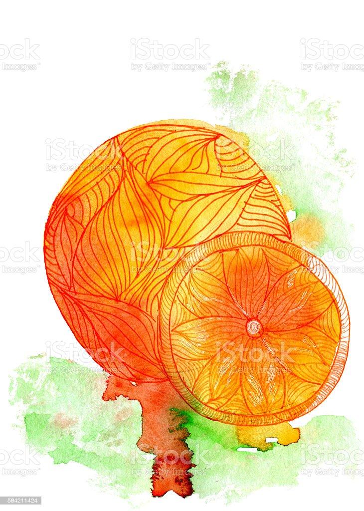 Watercolor orange fruit stock photo