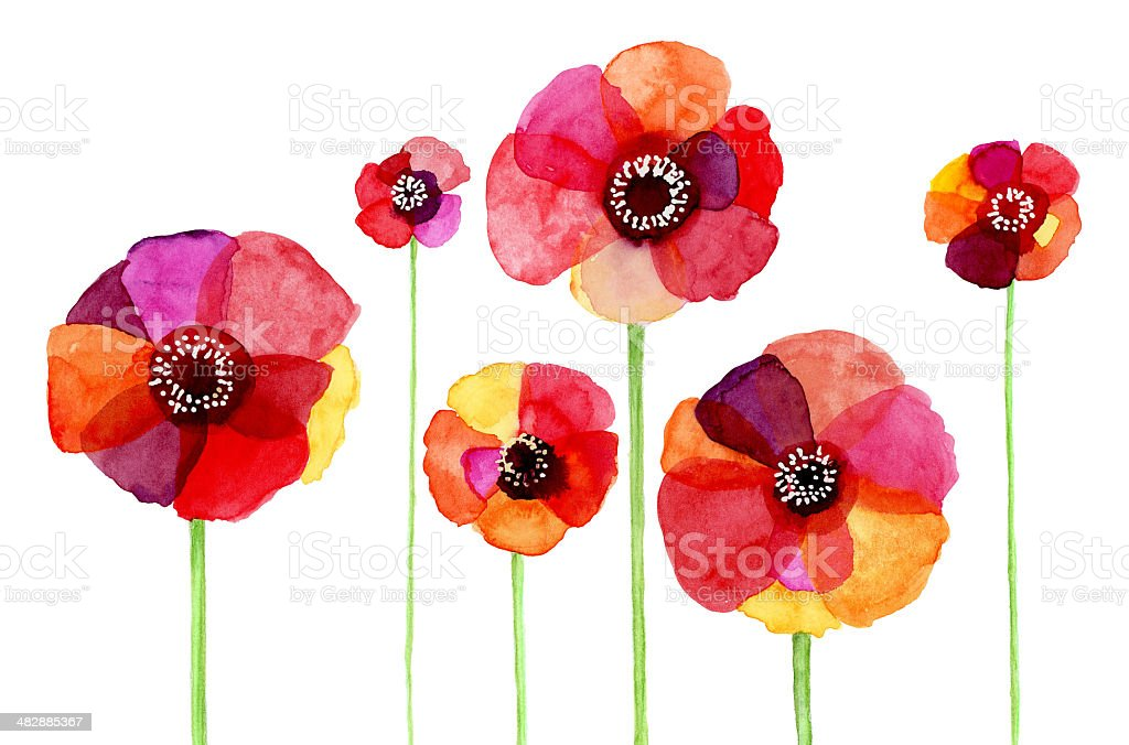 Watercolor painted Papaver Rhoeas stock photo