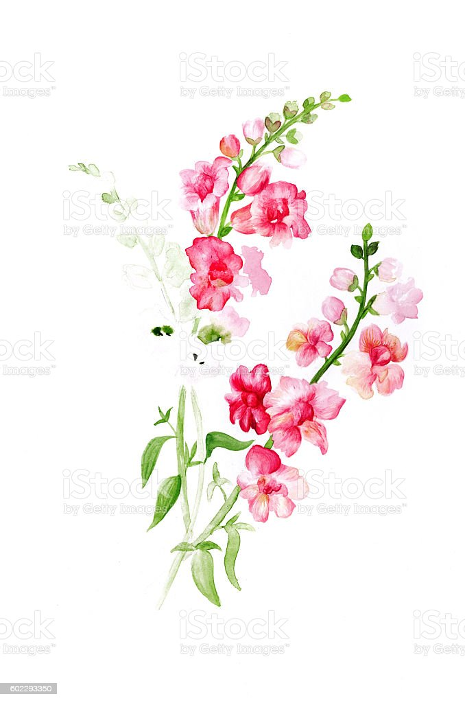 Watercolor painting of flowers stock photo