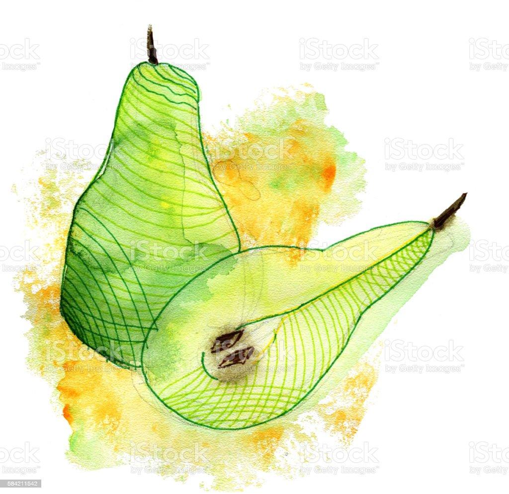 Watercolor pear stock photo