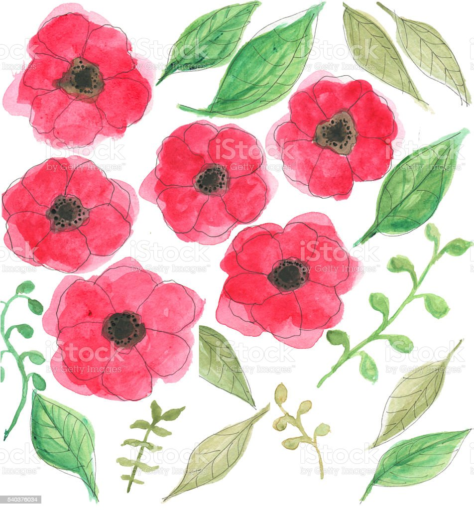 Watercolor Poppies and Leaves stock photo