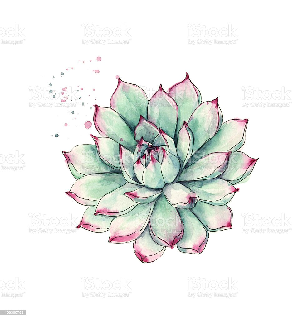 Watercolor succulent plant stock photo