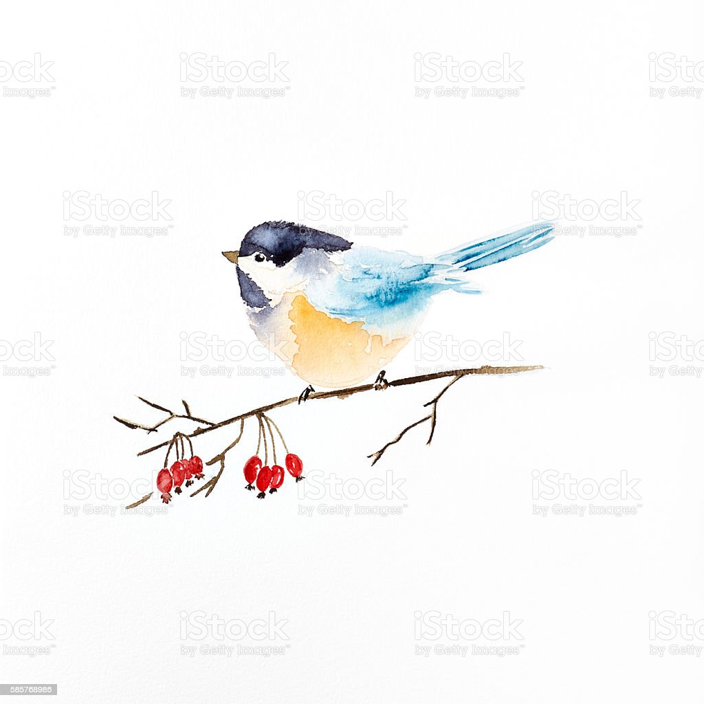 Watercolor Tit on a Winter Berry Sprig (hand drawn) stock photo