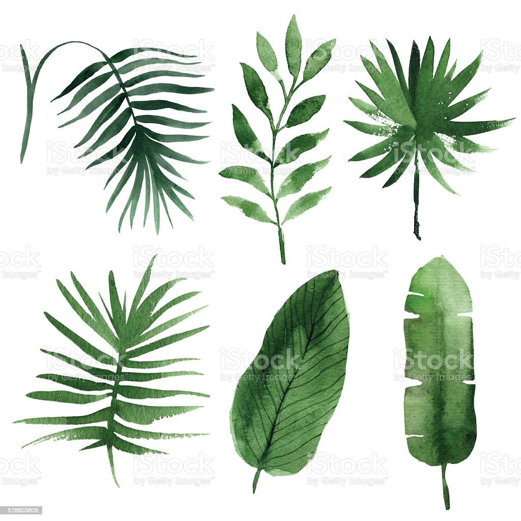 watercolor tropical leaves stock photo
