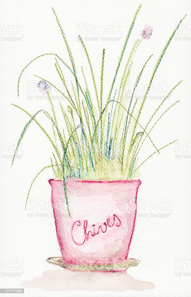 Watercolour painting of a chives plant pot royalty-free stock photo