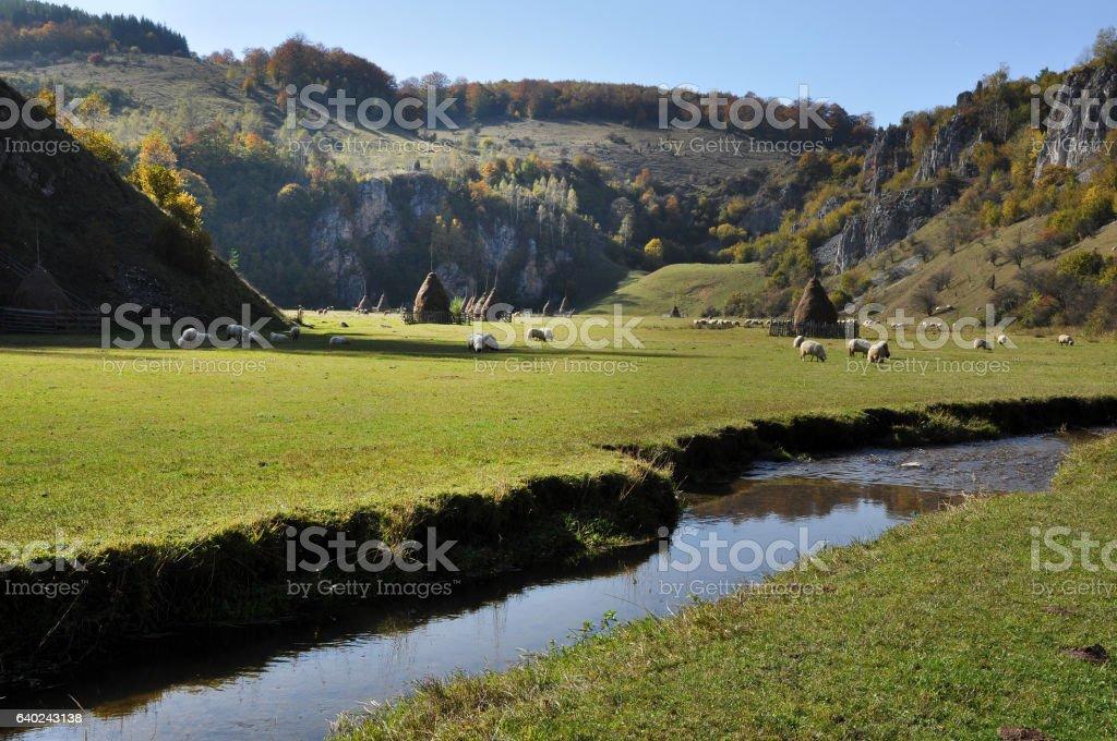 Watercourse in a green meadow. Herd of sheep stock photo