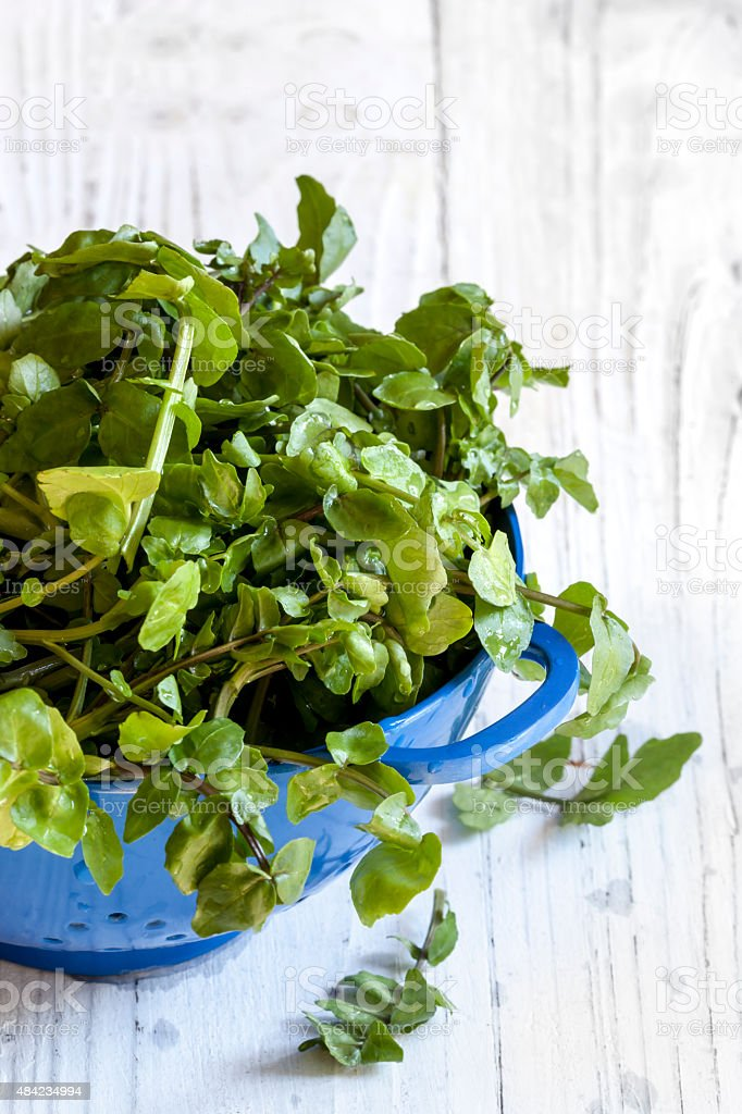 Watercress in Colander over White Timber Background stock photo