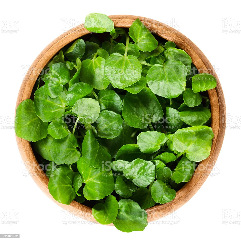 Watercress in wooden bowl over white stock photo