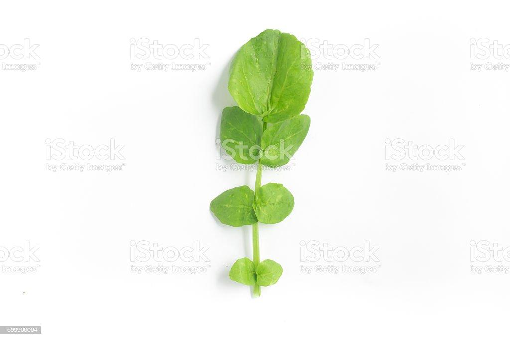 Watercress Leaves stock photo