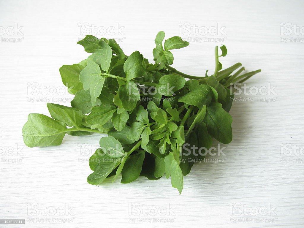 Watercress, Nasturtium officinale stock photo