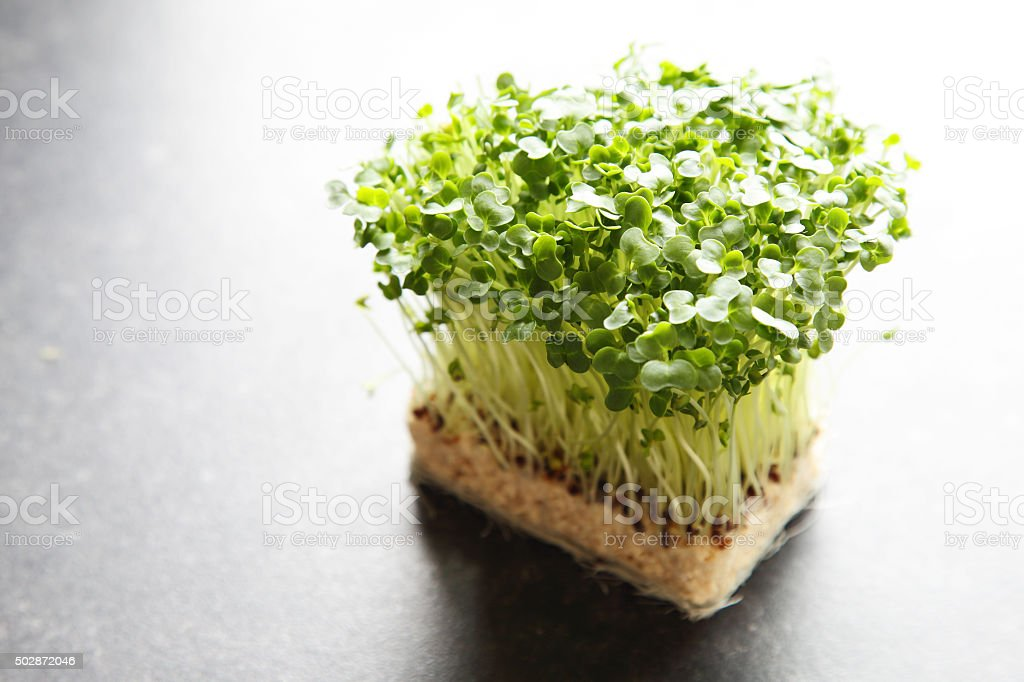 watercress on kitchen worktop stock photo