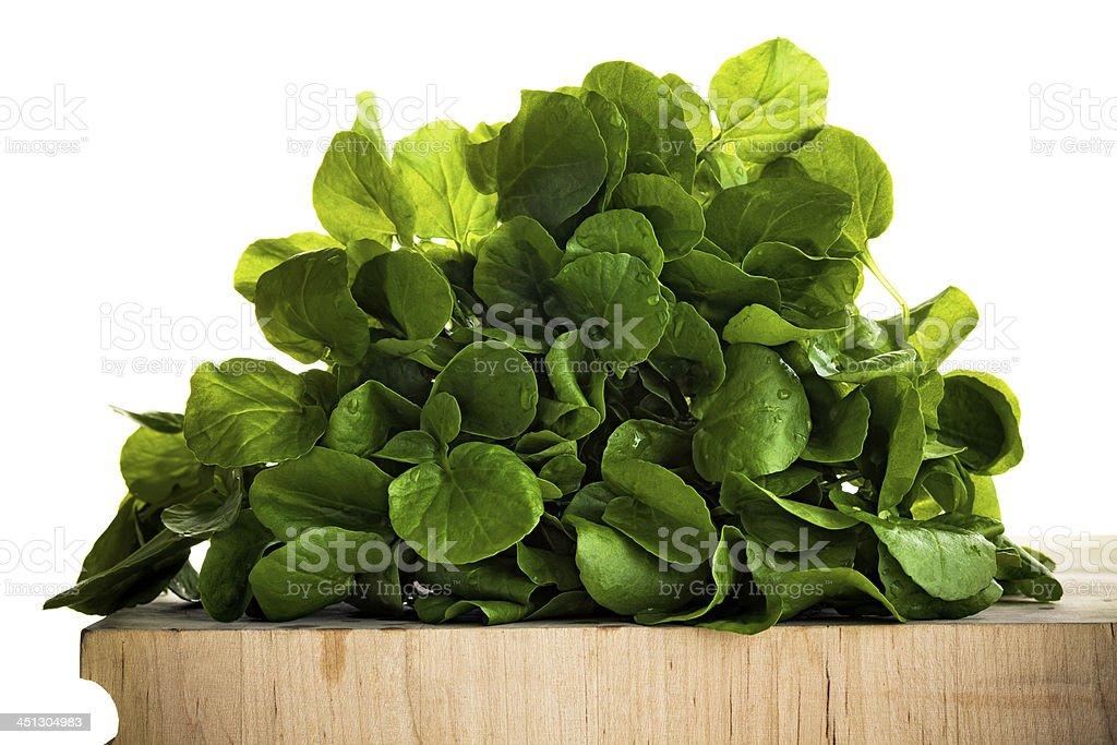 Watercress stock photo