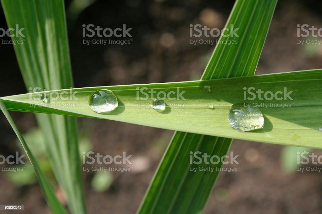 Waterdops royalty-free stock photo