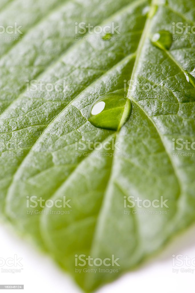waterdrop on a leaf royalty-free stock photo
