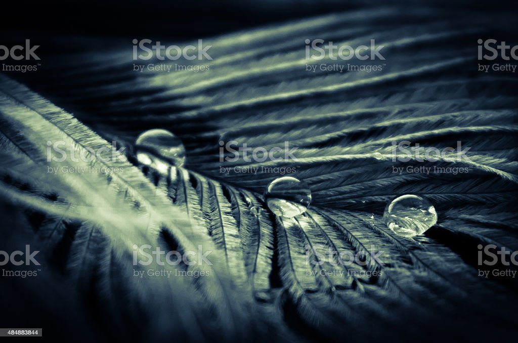 Waterdroplets on feather stock photo