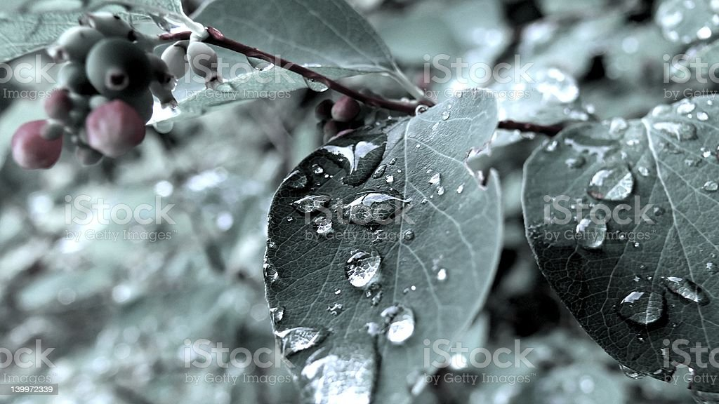 Waterdrops in the summer 01 royalty-free stock photo