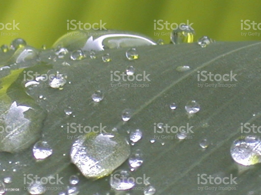 waterdrops on a leaf royalty-free stock photo
