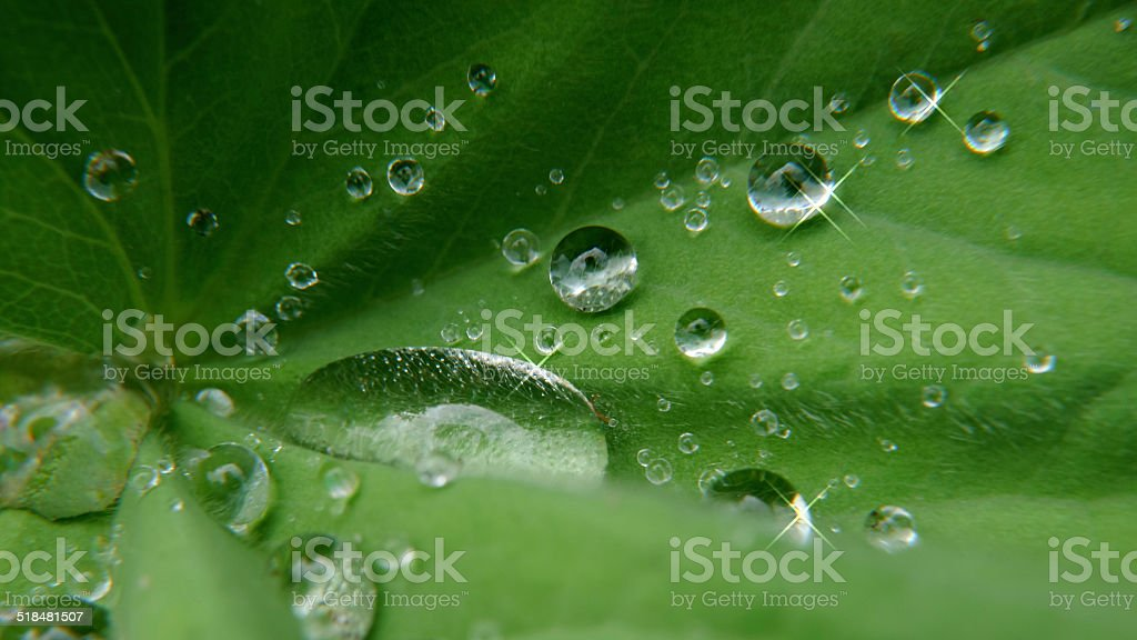 Waterdrops on leaf royalty-free stock photo