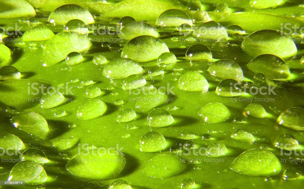 Waterdrops.. stock photo
