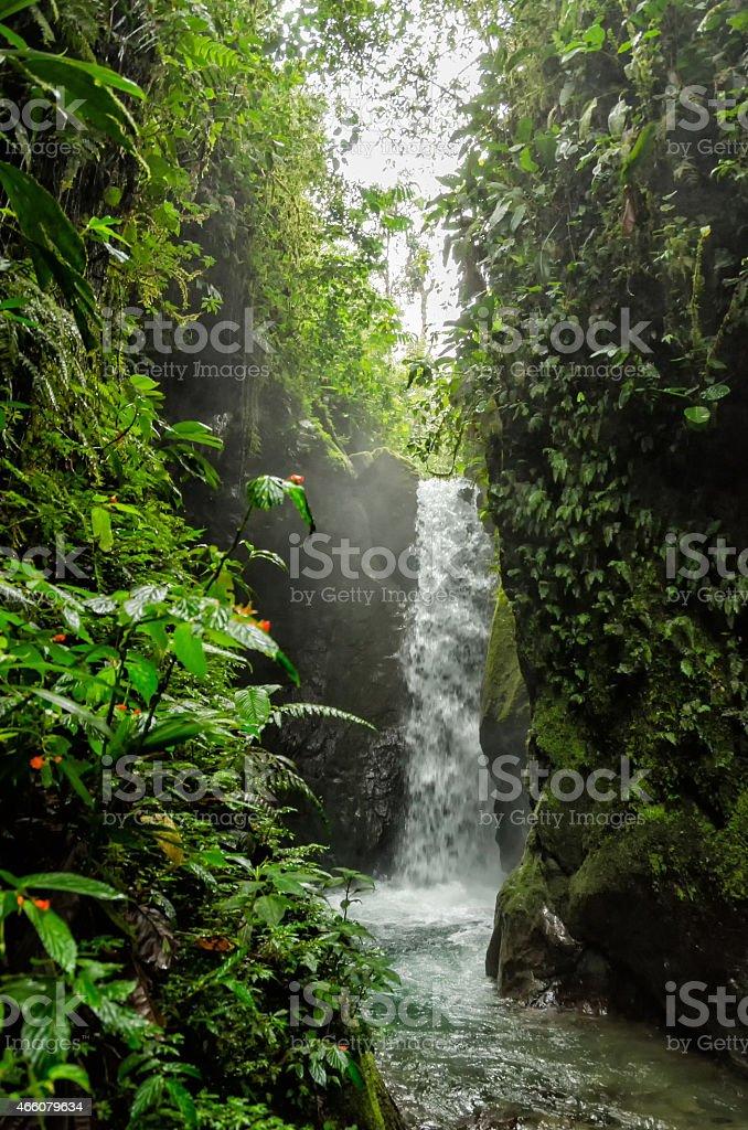Waterfall among lush tropical foliage stock photo