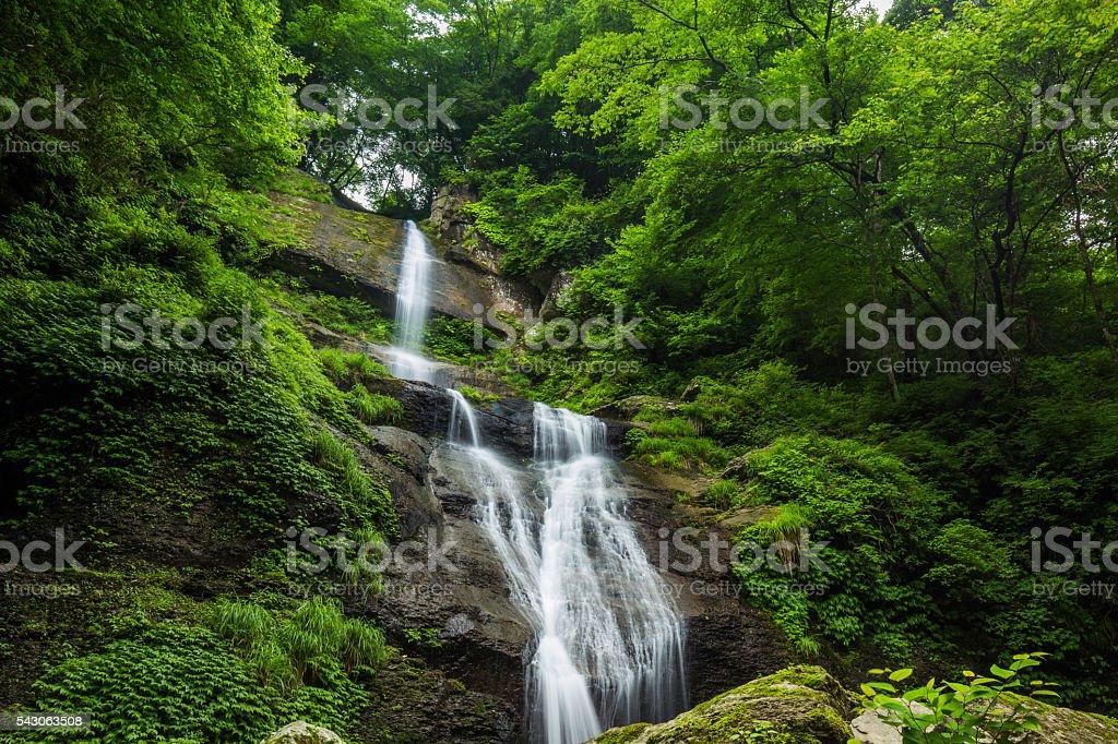 Waterfall and fresh green (Karakai no taki in Japan) stock photo
